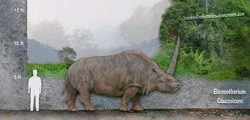 Elasmotherium by SameerPrehistorica