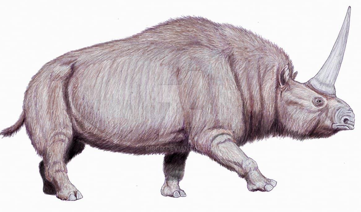 Elasmotherium by Dmitry Bogdanov