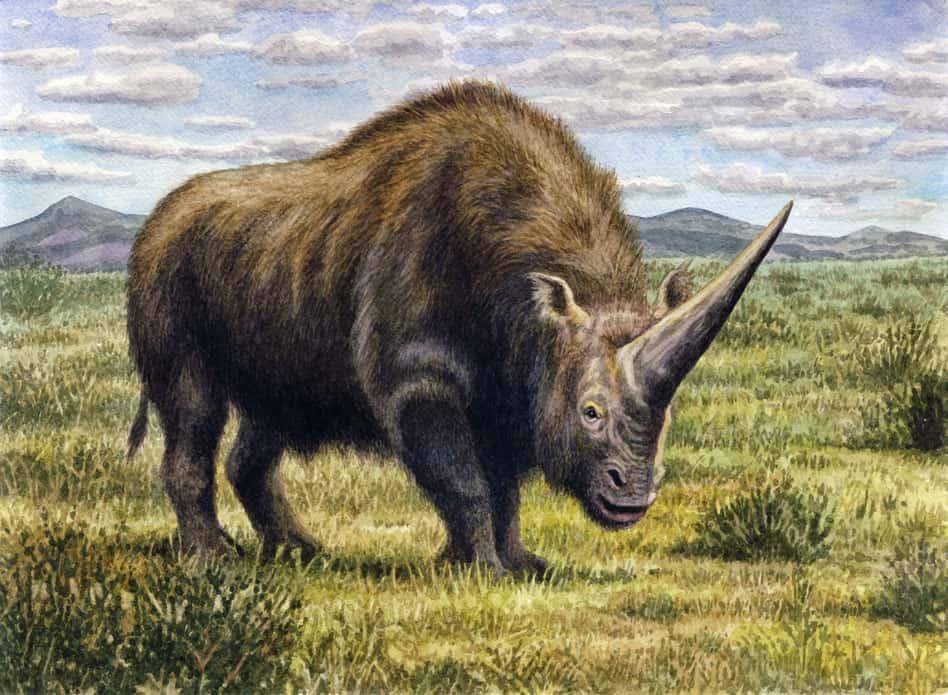 Elasmotherium by Willem van der Merwe