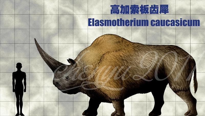 Elasmotherium by Chen Yu