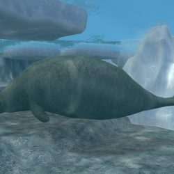 995_steller's sea cow_slimmy_jimmy