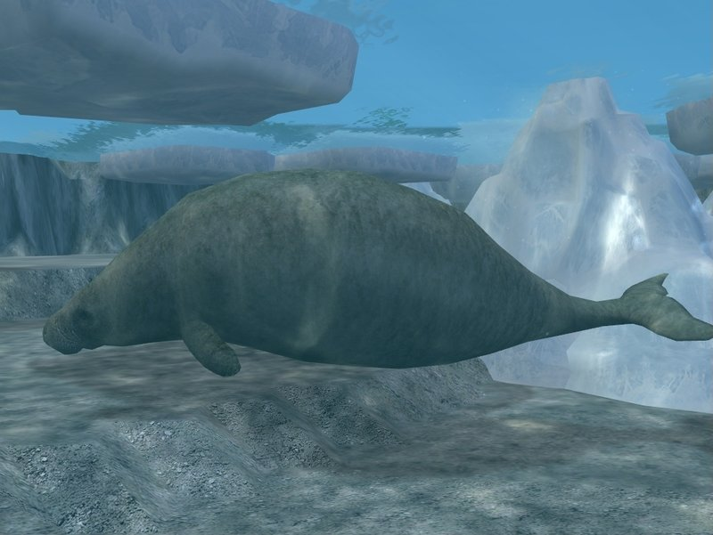 Steller's Sea Cow - Facts and Pictures - photo#19