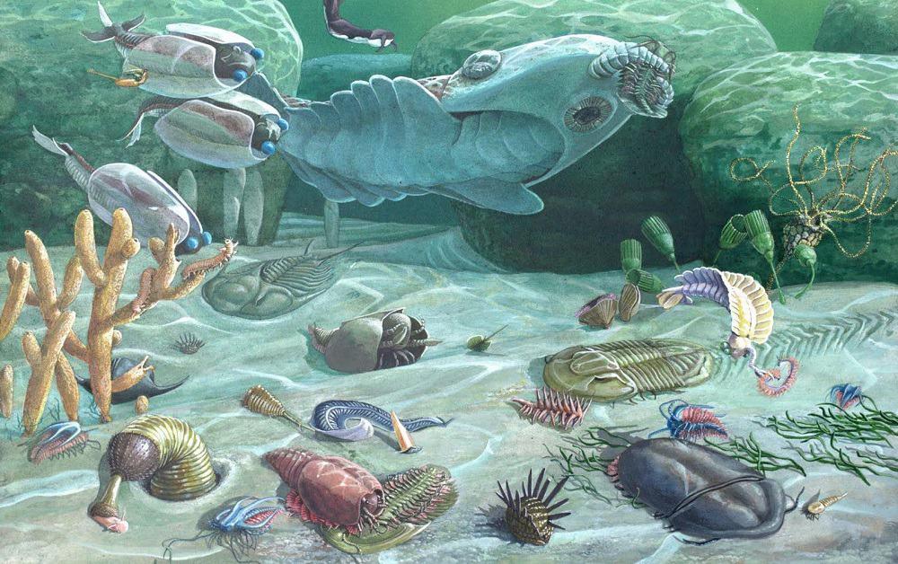 cambrian period plants