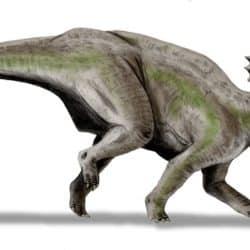 1651_centrosaurus_nobu_tamura
