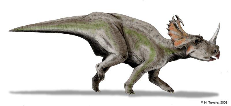 Centrosaurus by Nobu Tamura