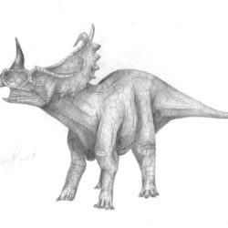 1654_centrosaurus_eurich