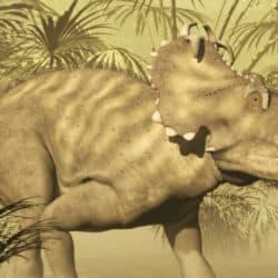 1655_centrosaurus_steven_thompson