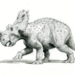 1658_centrosaurus_paul_heaston