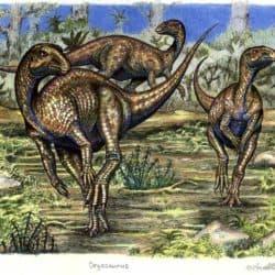 1663_dryosaurus_willem_van_der_merwe