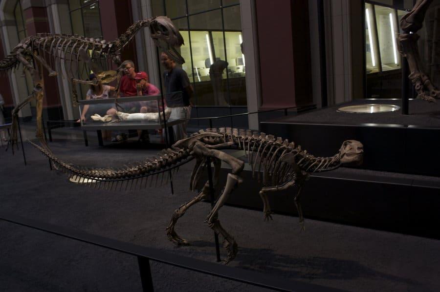 Dryosaurus by Bookscorpion