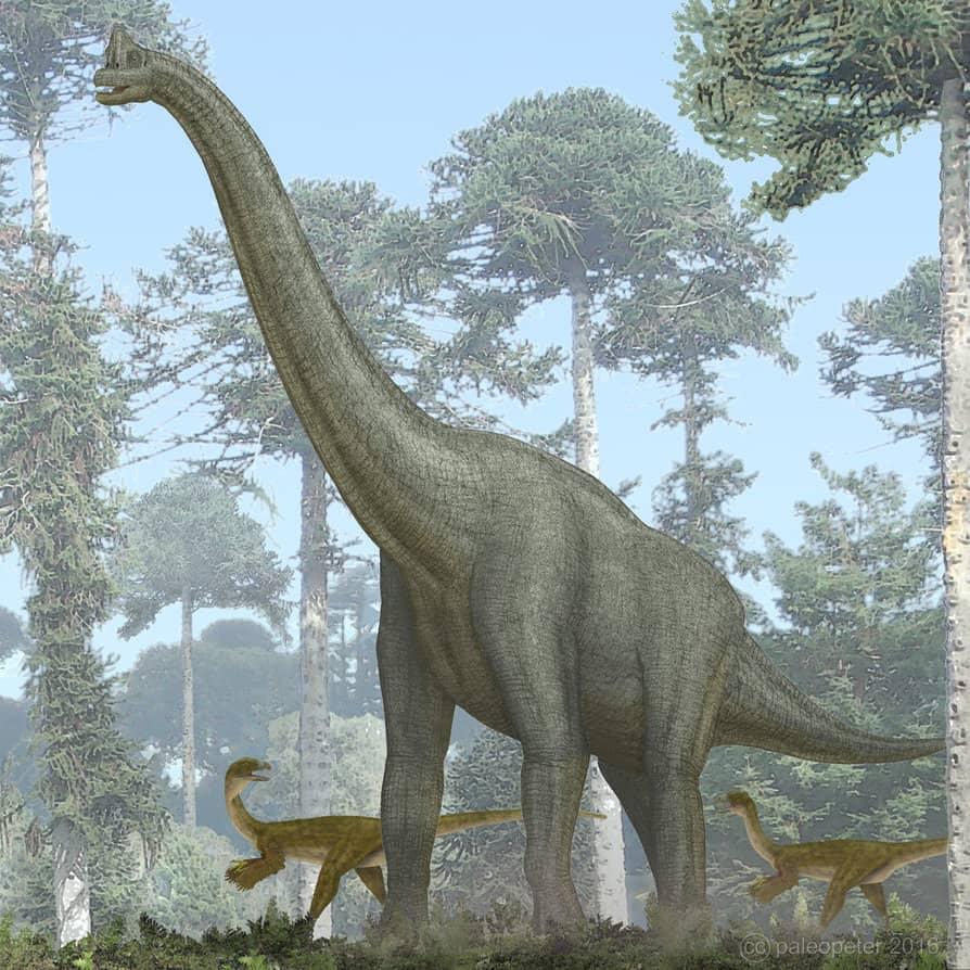 Giraffatitan by Peter Montgomery