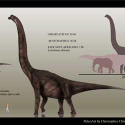 1675_giraffatitan_christopher