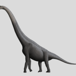 1678_giraffatitan_stephen_o'connor