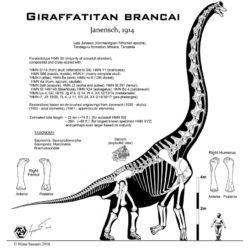 1679_giraffatitan_nima
