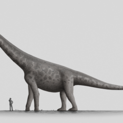1680_bruhathkayosaurus_stephen_o'connor