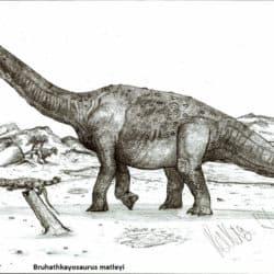 1682_bruhathkayosaurus_robinson_kunz