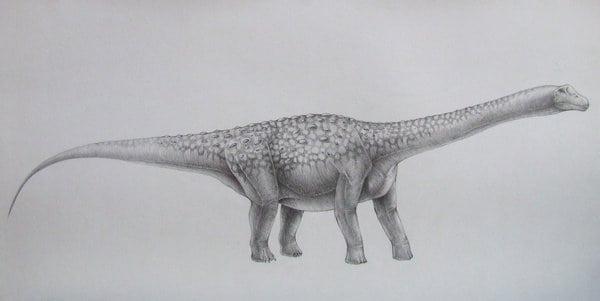 Bruhathkayosaurus by Vladimir Nikolov