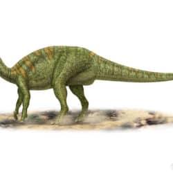 1686_camptosaurus_peter_montgomery