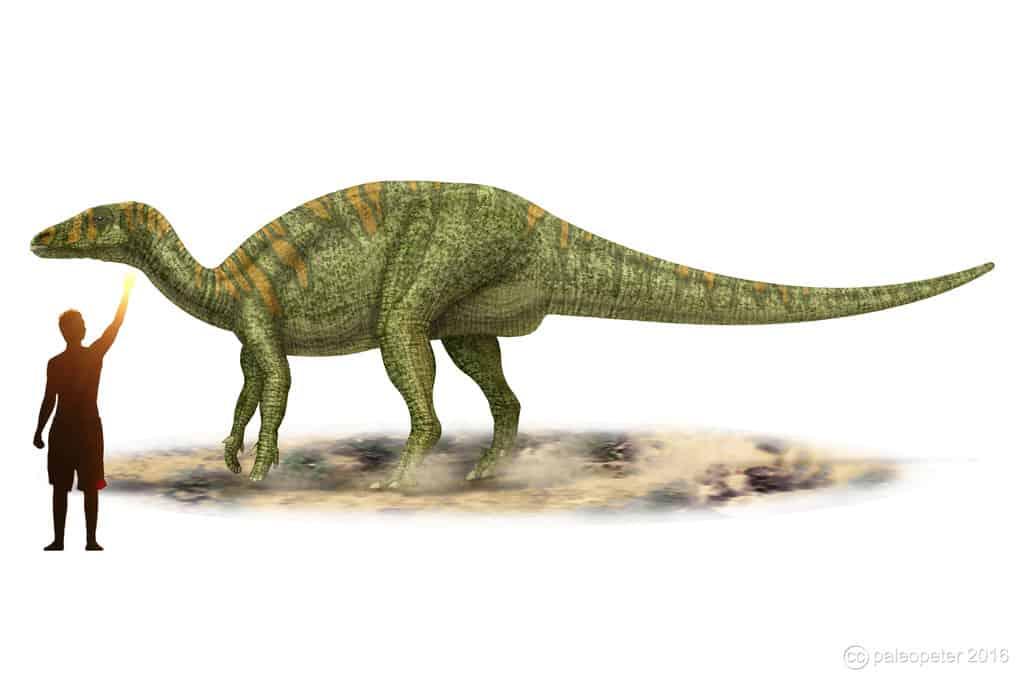 Camptosaurus by Peter Montgomery