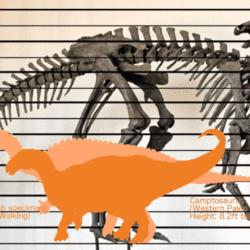 1688_camptosaurus_asuma17
