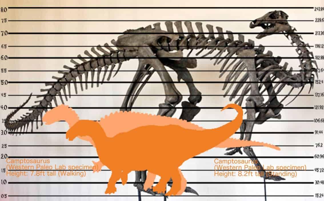 Camptosaurus by Asuma17