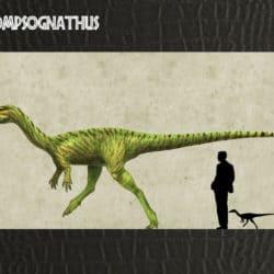 1689_procompsognathus_alvaro_rozalen