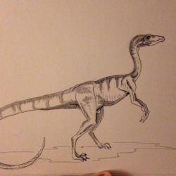1691_procompsognathus_cait_mac
