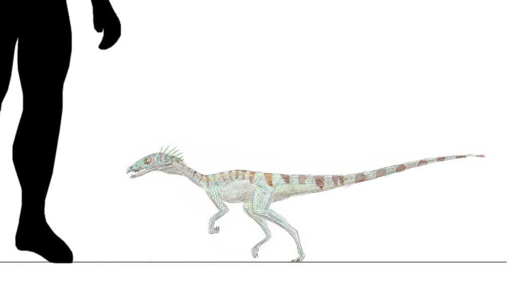 Procompsognathus by Mike Linnartz