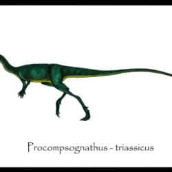 1695_procompsognathus_danillo_barion_de_oliveira
