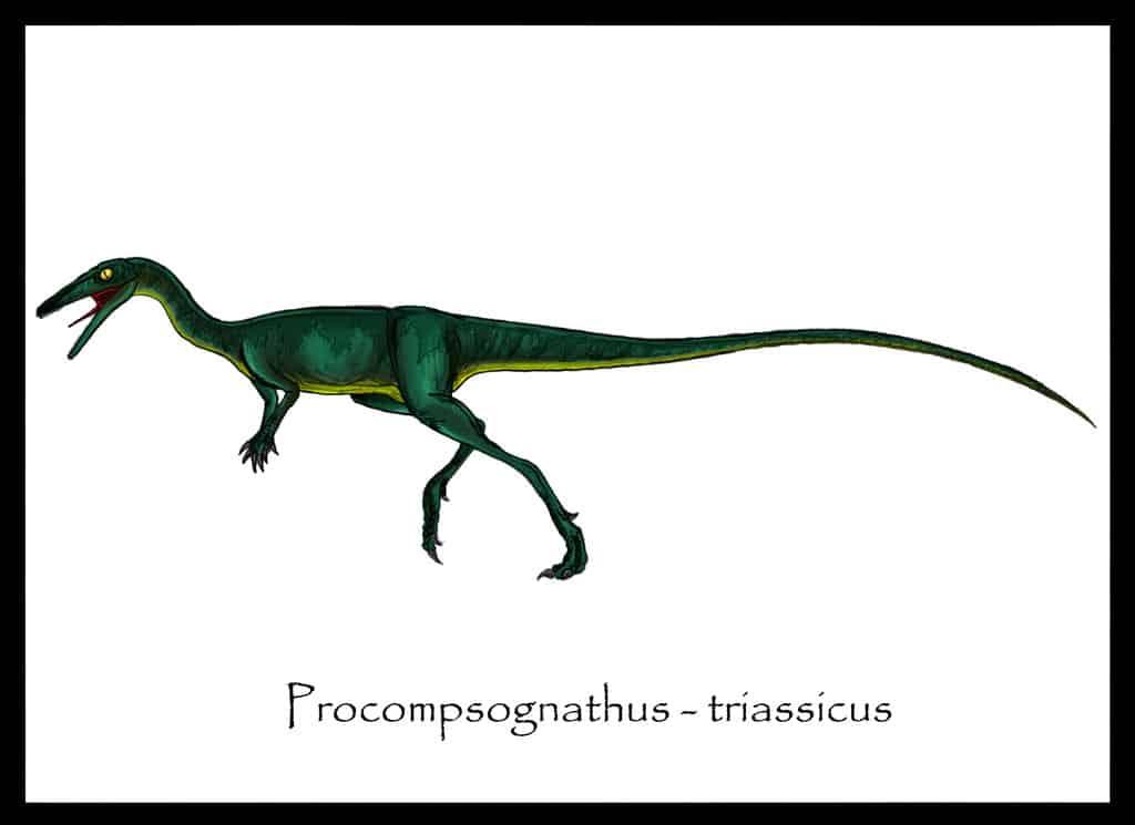 Procompsognathus by Danillo Barion De Oliveira
