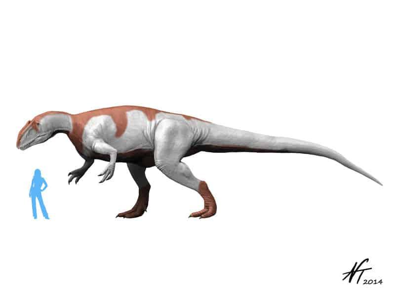 Yangchuanosaurus by Nobu Tamura