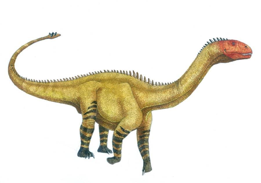 Shunosaurus by Vladimir Nikolov
