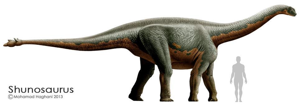 Shunosaurus by Mohamad Haghani