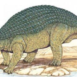 1729_nodosaurus