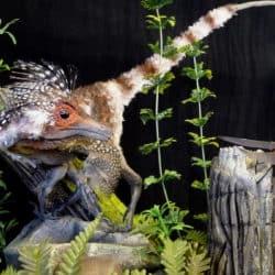 1731_sinosauropteryx_martin_garratt