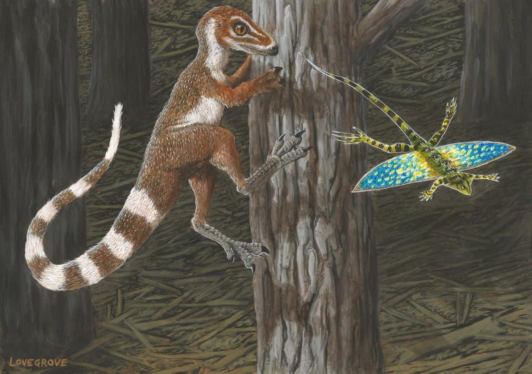 Sinosauropteryx by Alex Lovegrove