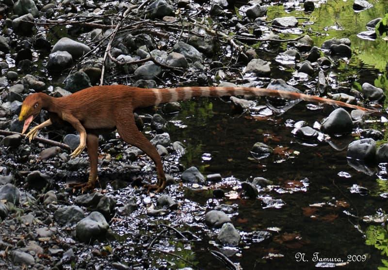 Sinosauropteryx by Nobu Tamura