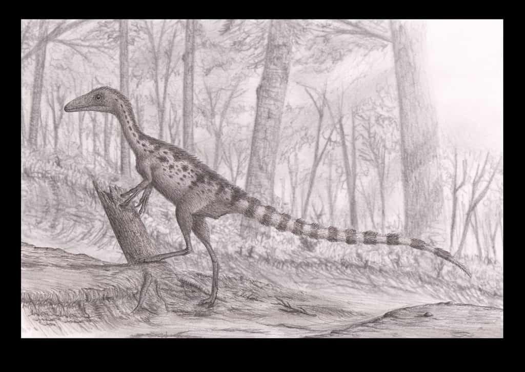 Sinosauropteryx by Stephen O'Connor