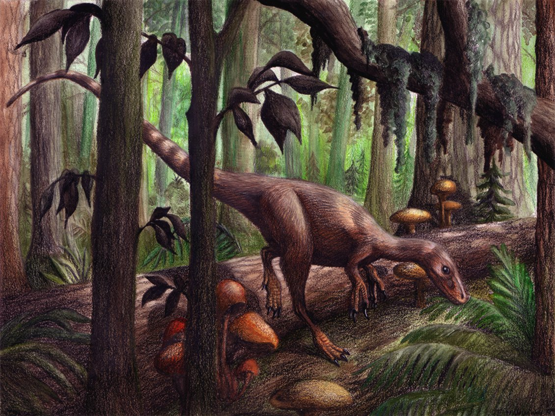 Sinosauropteryx by Emily Willoughby