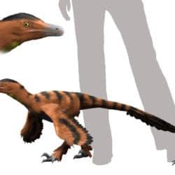 1741_sinornithosaurus_nobu_tamura