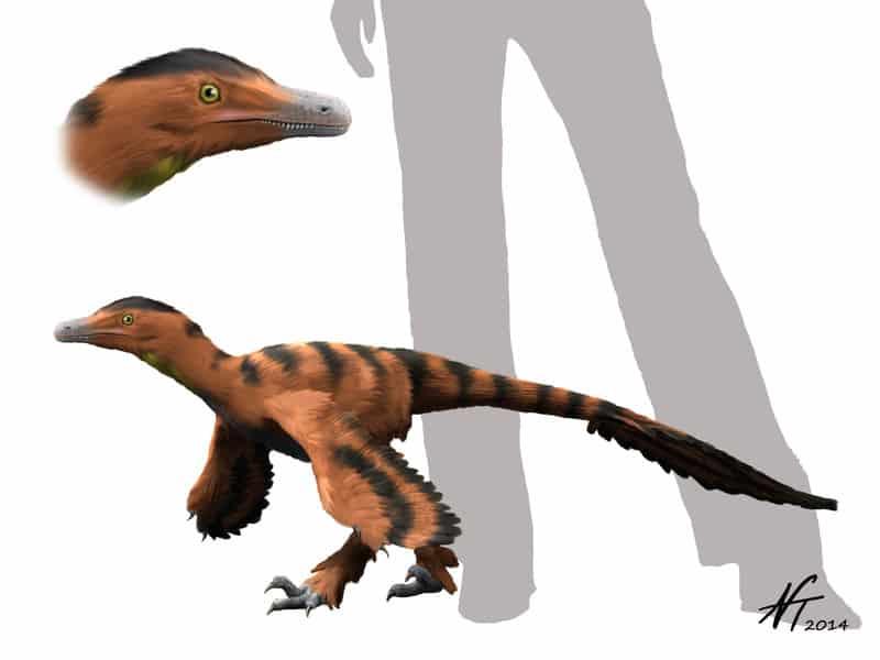 Sinornithosaurus by Nobu Tamura