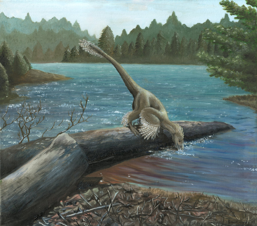 Sinornithosaurus by Emily Willoughby