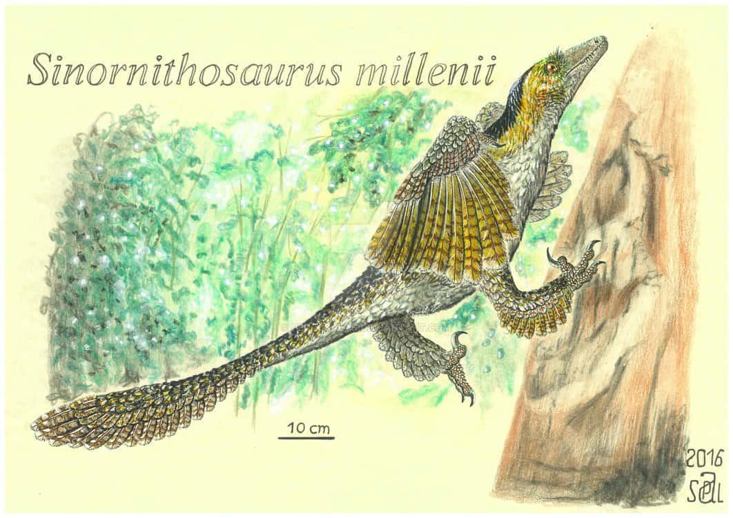 Sinornithosaurus by Pedro Salas