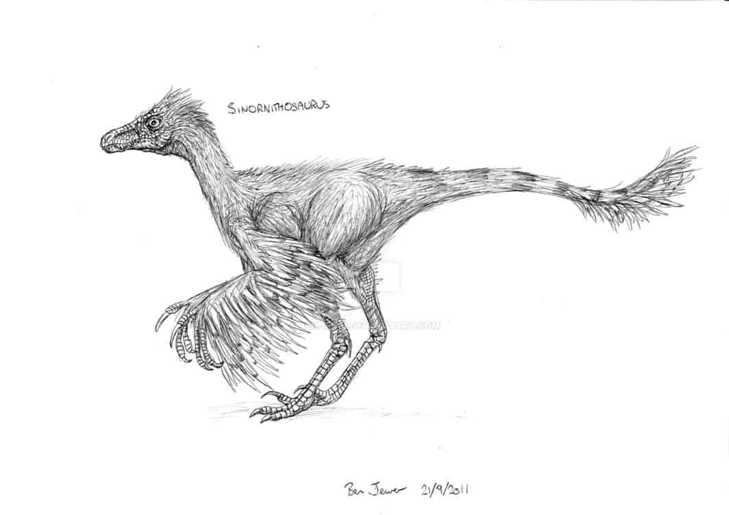 Sinornithosaurus by Ben Jewer