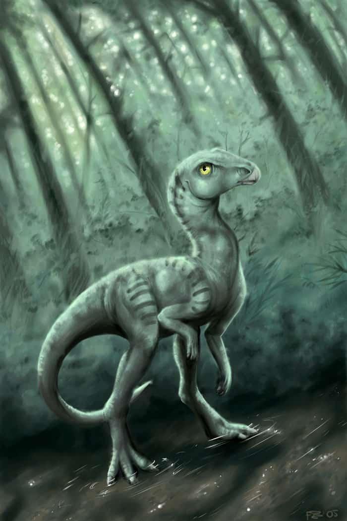 Leaellynasaura by Apsaravis