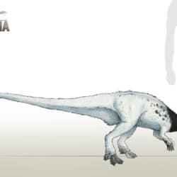 1760_leaellynasaura_camus_altamirano