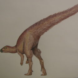 1763_leaellynasaura_fredrick_alexander
