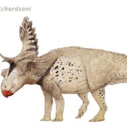 1775_kosmoceratops_joschua_knuppe