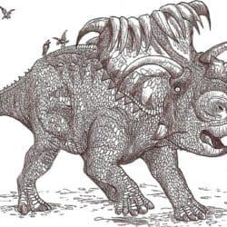 1777_kosmoceratops_hodarinundu