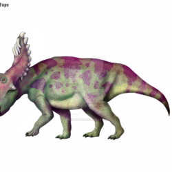 1779_kosmoceratops_cisiopurple